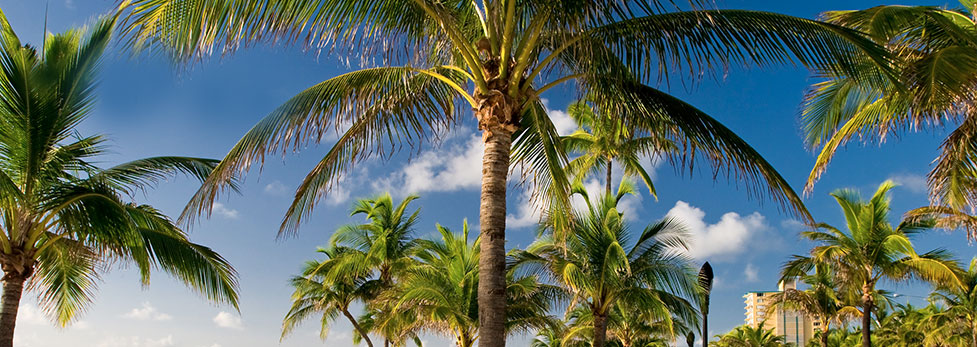 Tripadvisor Rental Cars Ft Lauderdale