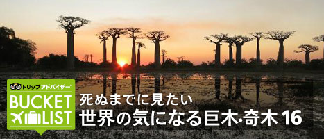 死ぬまでに見たい 世界の気になる巨木・奇木 16