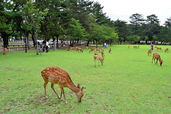 奈良公園の写真を見る