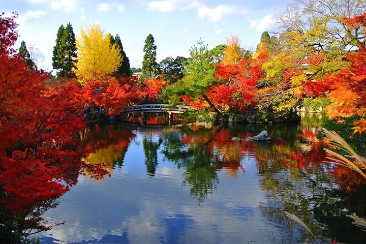 禅林寺 永観堂の写真