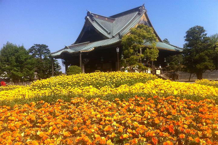 成田山 新勝寺の写真
