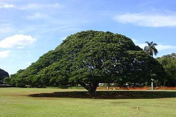 世界の気になる巨木・奇木 16