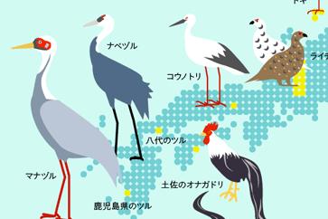 鳥を見に、旅に出よう