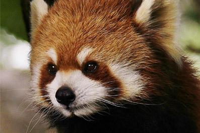 動物園&水族館ランキング 2013
