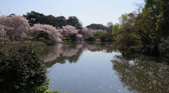 画像:新宿御苑