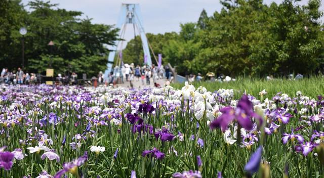 画像:水元公園