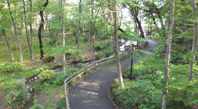 画像:林試の森公園