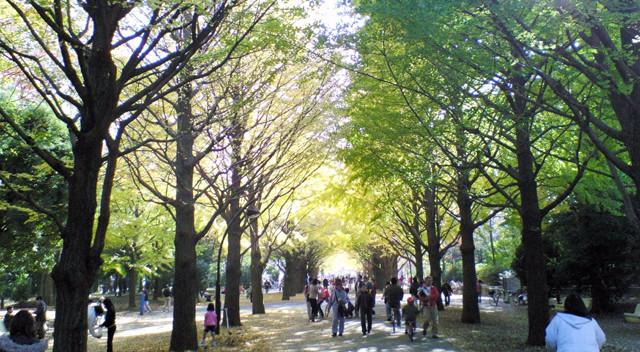 画像:光が丘公園