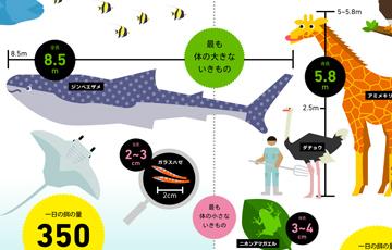 徹底調査 美ら海水族館&旭山動物園