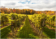 Best wine destinations